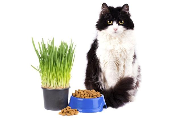 cat-image